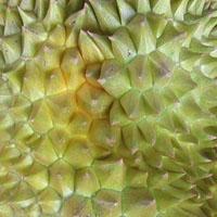 Fresh durian in Taipei, Taiwan